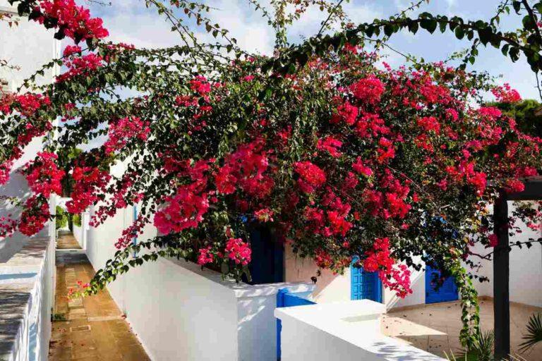 Villaggi appartamenti ville sul mare vicino Otranto nel Salento Puglia